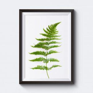 Affisch med naturmotiv av en ormbunke