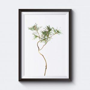 Poster med en tallkvist som naturmotiv.